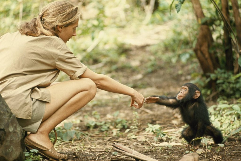 5. Jane reaching out to chimp 2400x1601